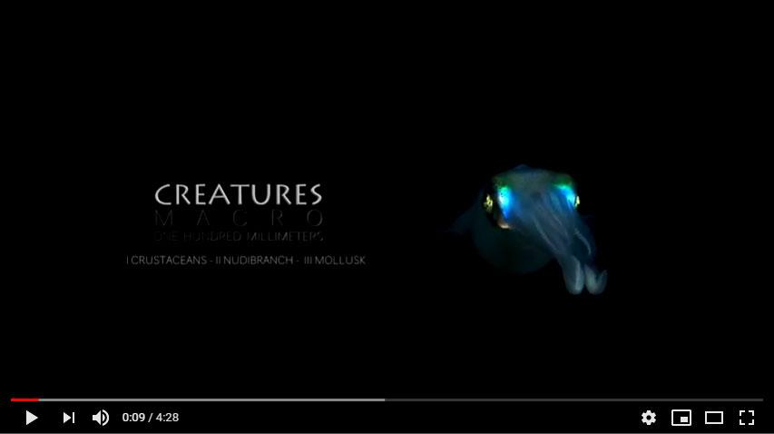 Creatures   Criaturas   Buceo en Filipinas